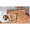 Nexxt Dispensador de Alimento para Mascotas Inteligente Wi-Fi  1080p